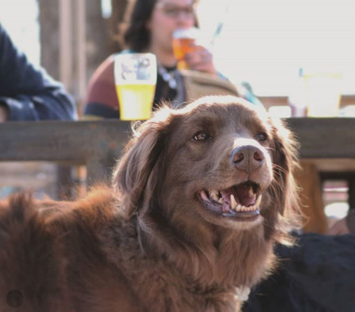 dog-friendly patio at 56 brewing in northeast minneapolis, mn